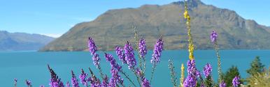 10 ימים טעימה מניו זילנד - אביב