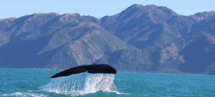זנב לווייתן
